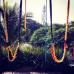 Alander Especie: Swings