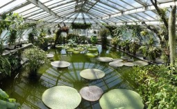 Water lillies in one of the tropical green houses of the Botanical Gardens in Berlin