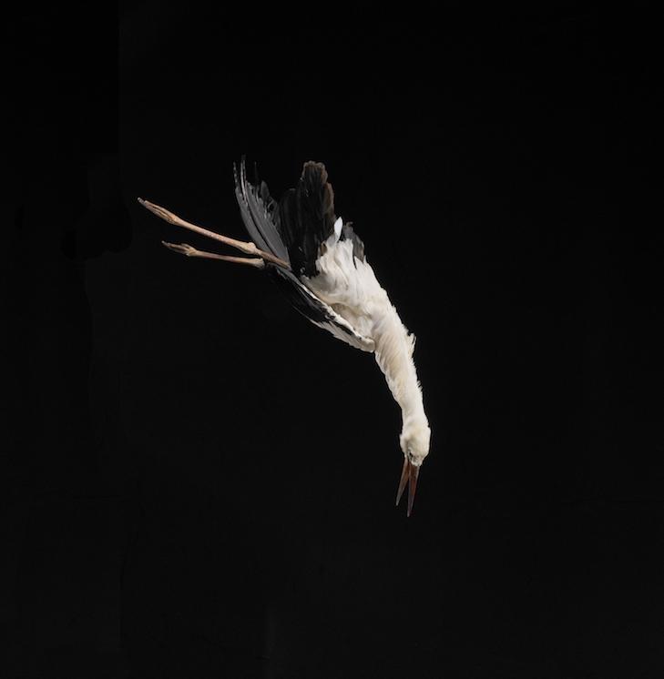 Julius von Bismarck, Tiere sind Engel mit Fell, 2018
